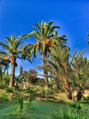 palmeral del jardi botanic de blanes