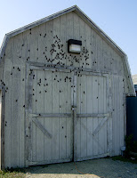 Moths On Shed