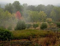 Click for larger view of Monticello Garden