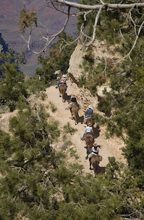 Click for Larger Image of mule riders returning on Bright Angel Trail. They will make one more switchback before reaching the last straight stretch to the corral