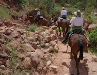 Click For Larger Image of Mules Rounding Switchback; One in Tow That Couldn't Stay Close To The Mule in Front