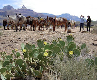 Click For Larger Image of Horses Tied at Plateau Point