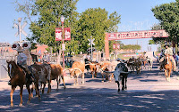 Click for Larger Image of Longhorns Beginning the Cattle Drive