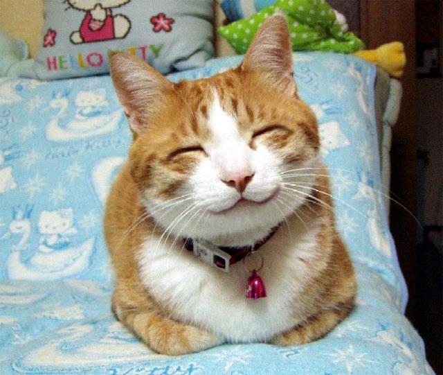 Galería de Cristal~ Gato-feliz