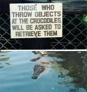 funny pics, Krokodile Füttern, Zoo, lustig, lachen
