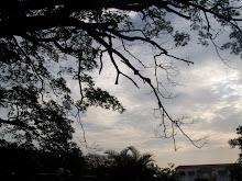 RIP, Rain Tree!