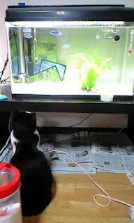 うにゃうにゃ言いながらルリスズメを捕まえようとする猫の図