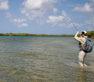 Miriam engeln aruba connections fly fishing aruba pictures Fishing in aruba