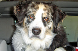 Puppy Boy  Jackson