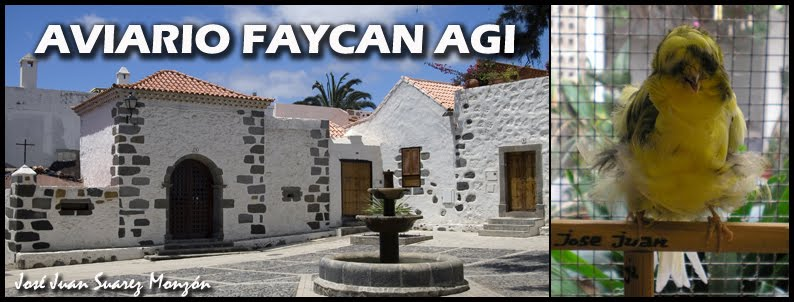 AVIARIO FAYCAN AGI