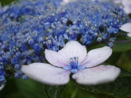 花束にされない花達