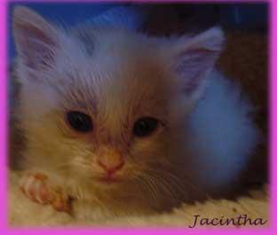 Jacintha     6 mei 2010  -   6 juni 2010