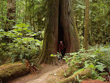 Redwood Forest on Vancouver Island
