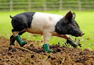 [PIG_IN_BOOTS_404_677893c.jpg]