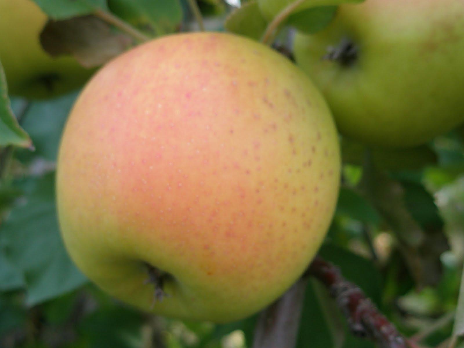 Apple Tree Natural Foods Market