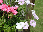 Wave Petunias, Geraniums
