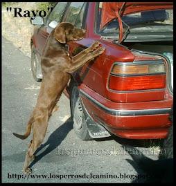 Lee la historia increible de Rayo, has clic sobre la foto.