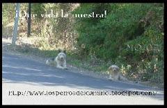 """""""Los Perros del Camino"""""""