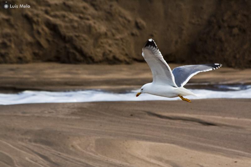 Mais um com gaivotas Gaivota2