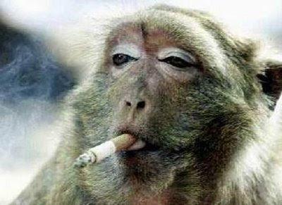 http://1.bp.blogspot.com/_RePlKsFUoas/SxUHRqXfDWI/AAAAAAAABes/ut_fYfdbJaM/s400/beruk+rokok.jpg