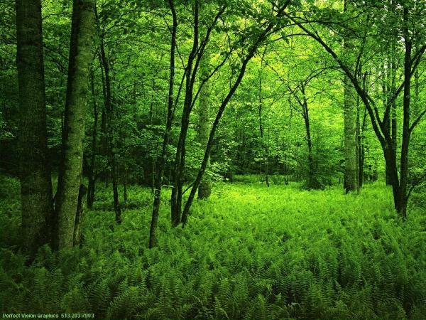 Berlomba menghabisi hutan tropis