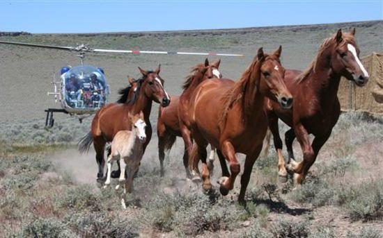 horses running free. horses running free.
