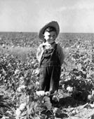 Li'l Cotton Picker