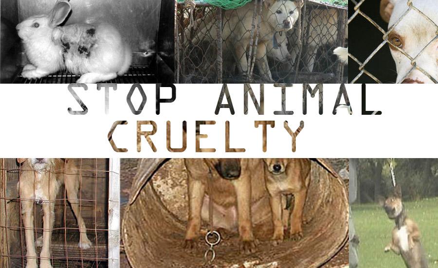 Animal Cruelty Quotes Entrancing Ysvlek Animal Cruelty Quotes