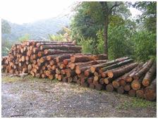 GCM apreende veículos e madeira ilegal na região de Perus