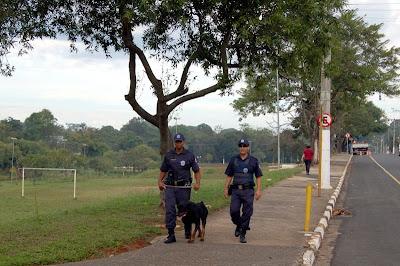Cães da Guarda Municipal de Moji Mirim já estão em treinamento nas ruas