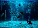 my blue aqua