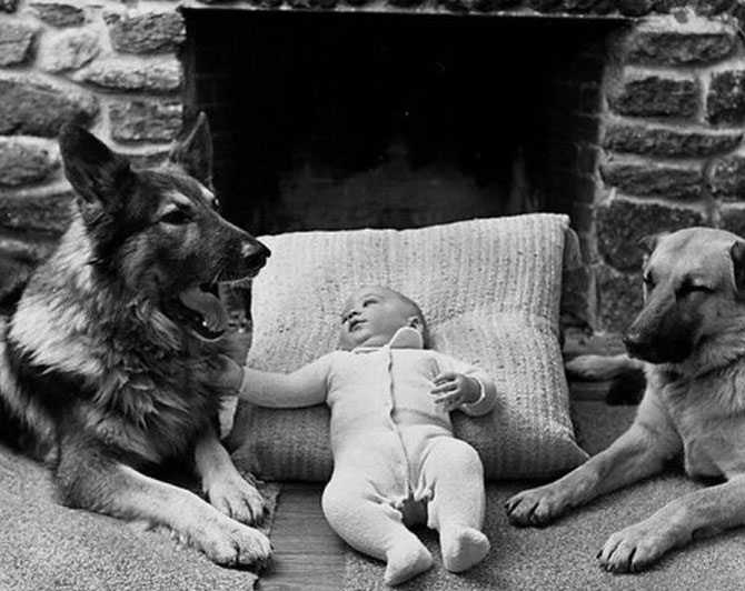 Funny+Photos+of+Kids+and+Animals+%252811%2529 Cute  Photos of Kids and Animals