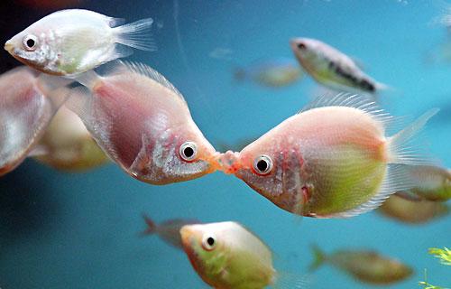 ... animales besandose lindas imagenes de animalitos dandose muchos besos