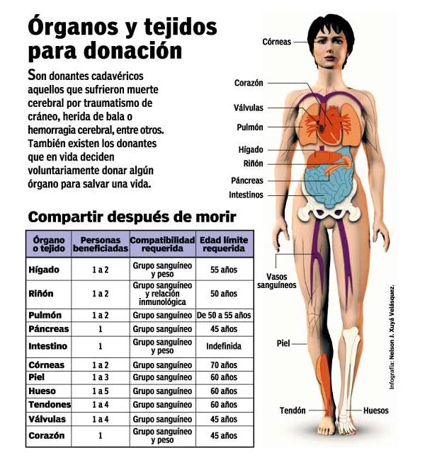 informacion sobre donacion organo: