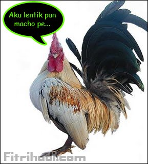 gambar ayam katik serama lentik jaguh juara