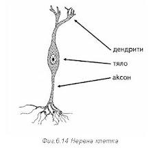 невронна клетка