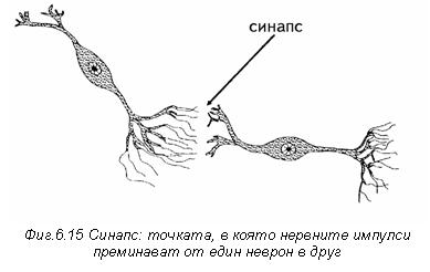 невронен синапс