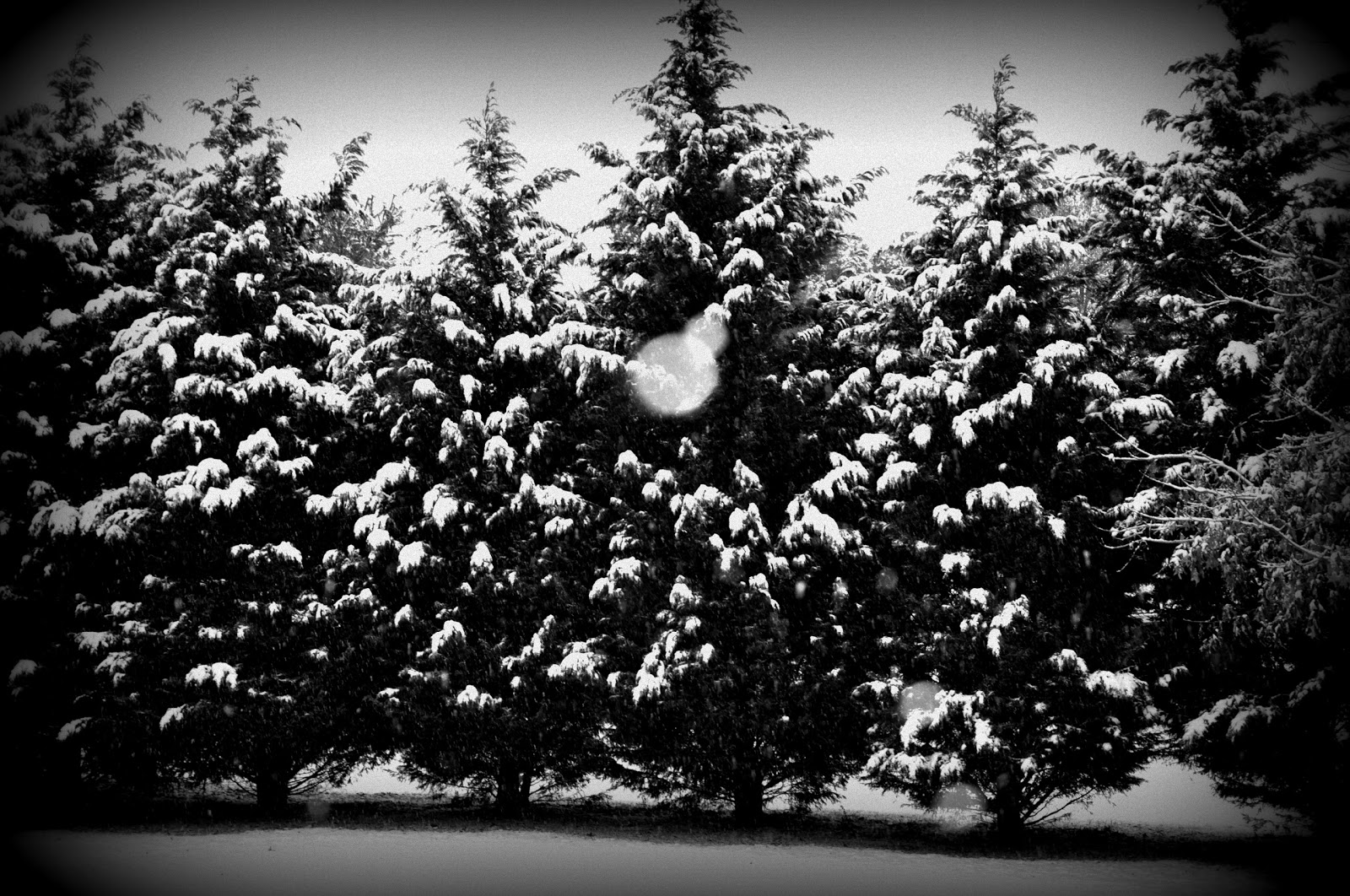 christmas pictures black and white - Black And White Christmas