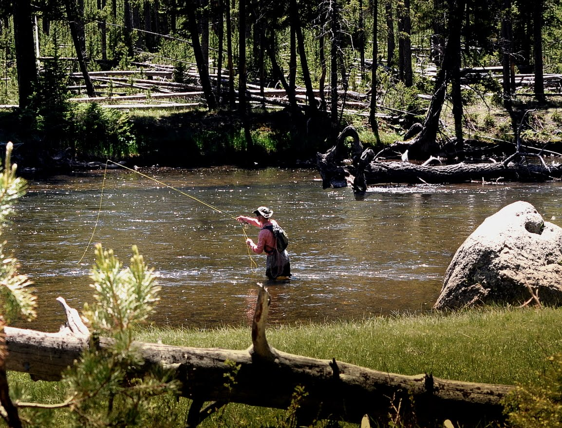Fly fishing in yellowstone national park the best laid plans for Yellowstone park fishing report