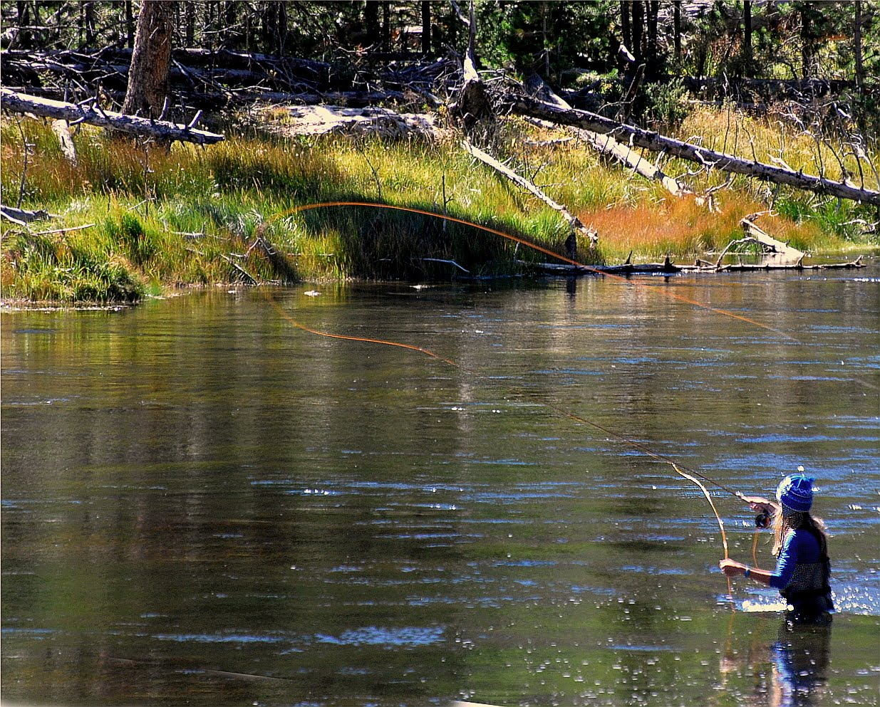 Fly fishing in yellowstone national park west side adventures for Yellowstone national park fishing