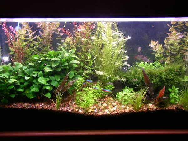 My Fish Tank: How to configure your freshwater fish tank