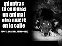 NO COMPRES PERROS, ADOPTALOS!!