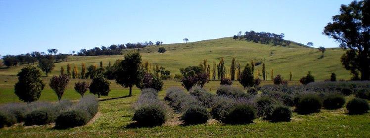 Kangaroo Flat Lavender Farm