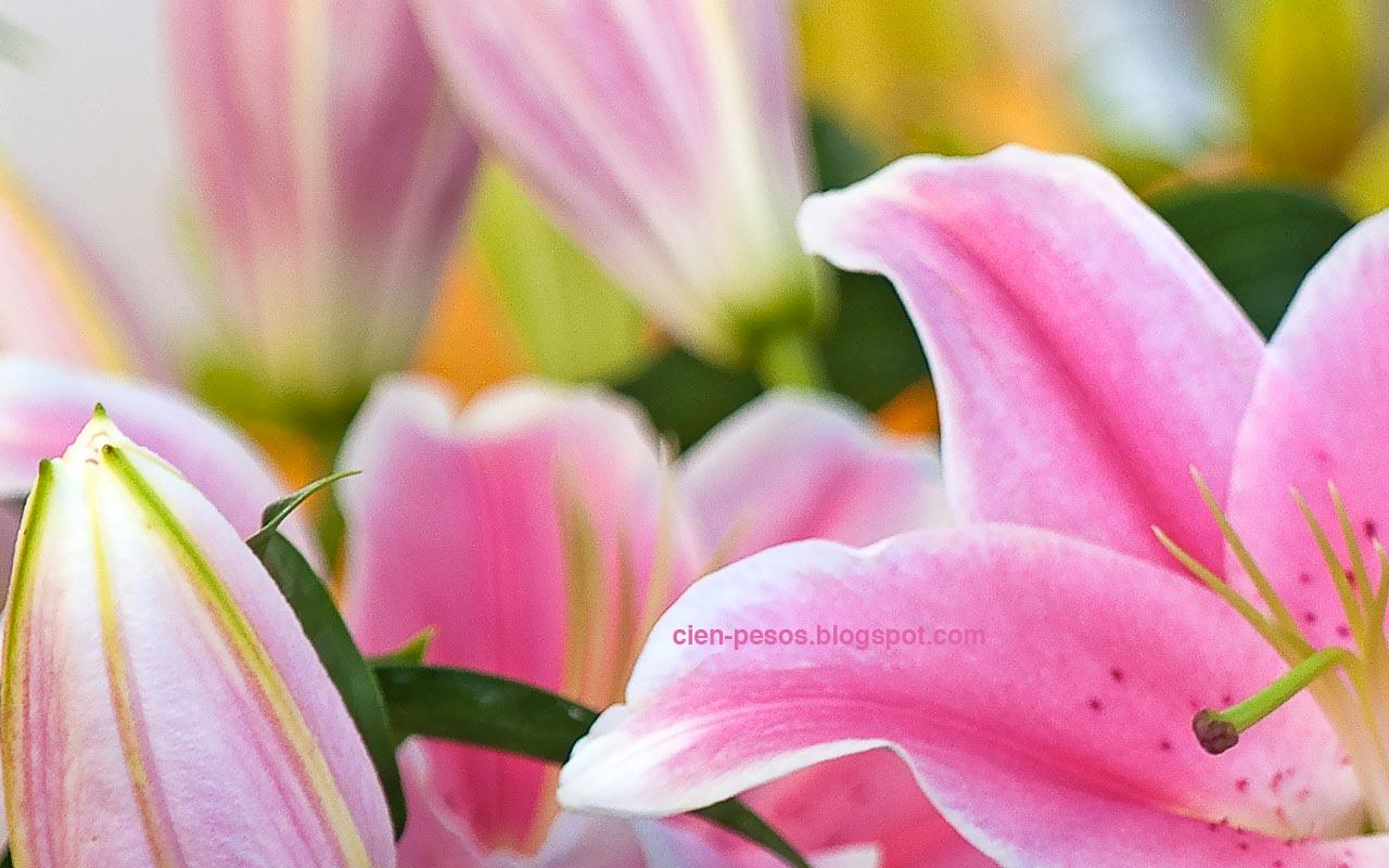 Fondos Para Diapositivas Flores