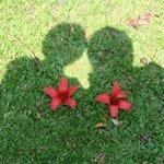 Flower Hearts