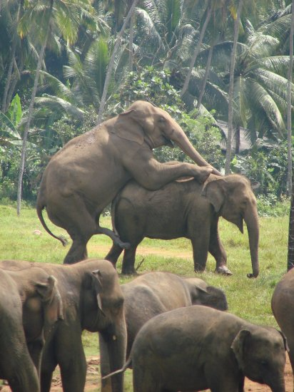 pictures women having sex with a elephant