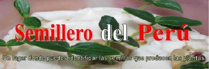 SEMILLERO DEL PERU
