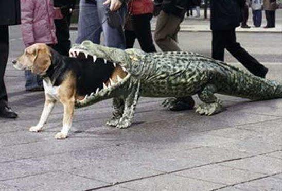 Alligators Eat Dogs