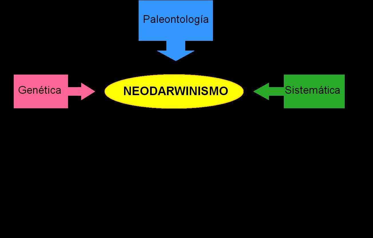 Neodarwinismo in pdf herunterladen