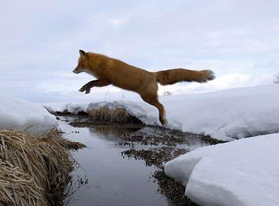 Lambang Mozilla Firefox8